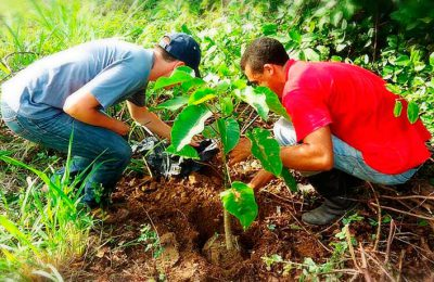BOOK A TOUR AND PLANT A TREE