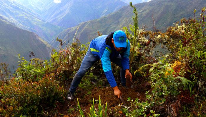 tree-planting-2019-peru-private-tours
