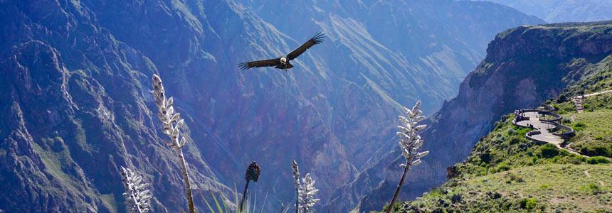 Top Destinations in Peru: Arequipa